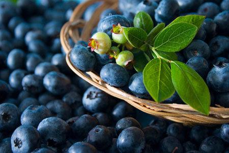 Quả việt quất giúp hóa giải chất béo